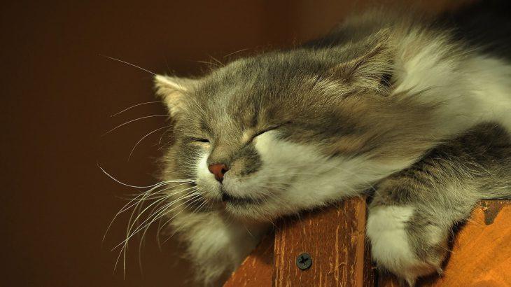 人生の質も左右する「睡眠のクオリティ」の高め方